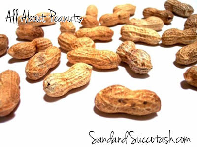 Sand and Succotash | All About Peanuts